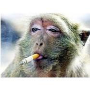 Monkey Solubarôme