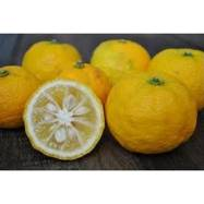 Citron Japonais YUZU Solubarôme