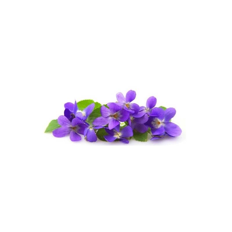 Violette Solubarôme